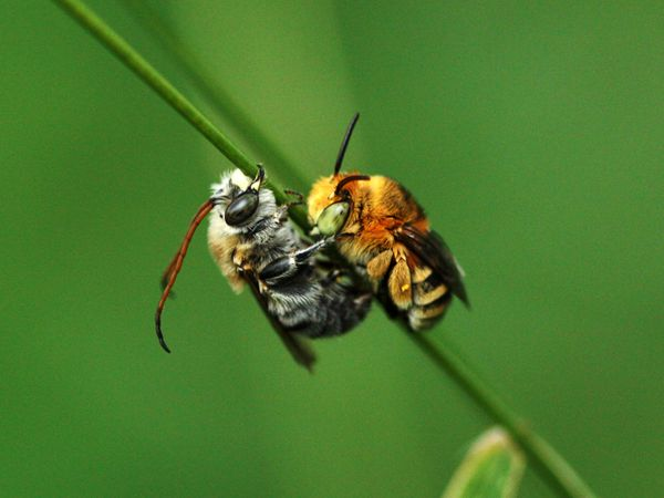 bees-sleeping_48522_600x450