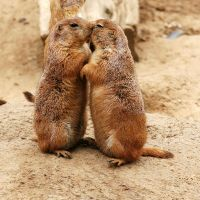 Ladies stick together: from humans to prairie dogs