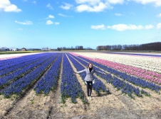 lovely smell in the Hyacinth fields